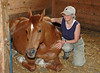 """<div class=""""jaDesc""""> <h4> Bronzz Napping - May 29, 2010</h4> <p>  Bronzz was napping one day when Lynn went to groom him for a trail ride.  He remained lying down while she curried and brushed his back and gave him a hug.</p> </div>"""