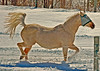 """<div class=""""jaDesc""""> <h4>Sapphire Prancing in Fresh Snow - March 5, 2006 </h4> <p>  After an 8 inch snow fall, we let the horses into our riding area for a romp.  They all had a wonderful time, especially Sapphire in this shot.  The fly mask doubles nicely as sunglasses on winter days when the glare is intense. </p> </div>"""