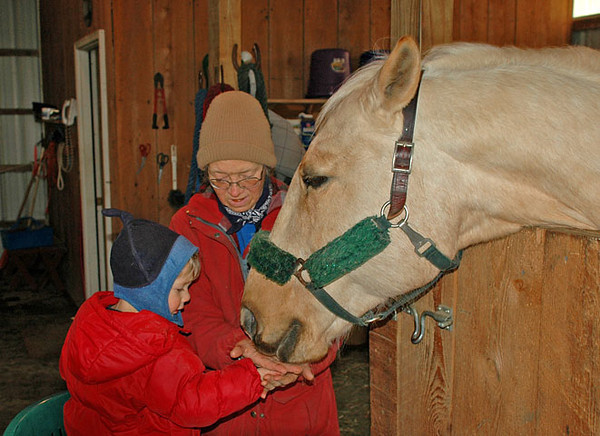 """<div class=""""jaDesc""""> <h4> Colin Feeding Sapphire - March 10, 2009</h4> <p>   Our grandson Colin loves to spend time in the barn with our horses.  Here he is feeding an apple wafer treat to my mare Sapphire.</p> </div>"""