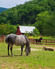 Paso Fino Horse Ranch