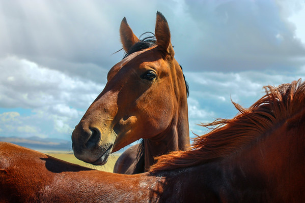 Divine love of the Equine