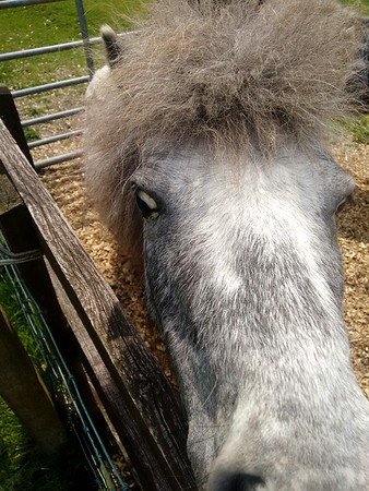 The day I met a crazy, tiny horse with electric hair! � 🦄⚡