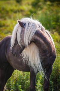 Grayson Pony 2