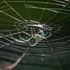 Metamerism of Spider