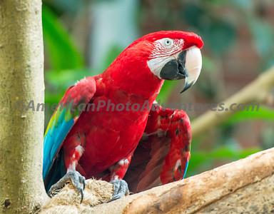 National Aviary_0066