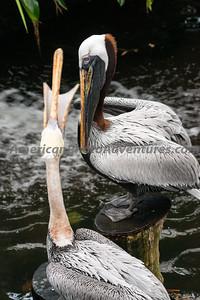 National Aviary_0126