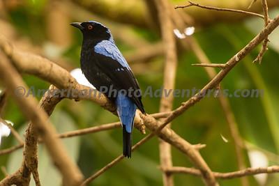 National Aviary_0309