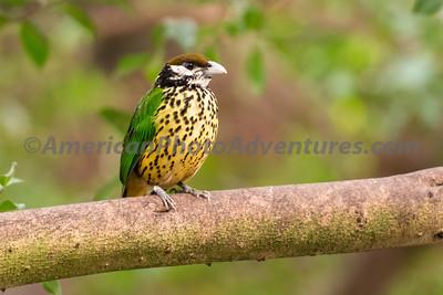 National Aviary_0381