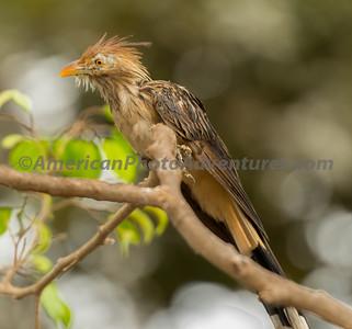 National Aviary_0072