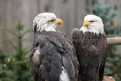 National Aviary_0050