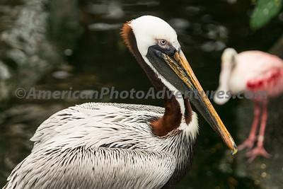 National Aviary_0068