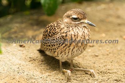 National Aviary_0292