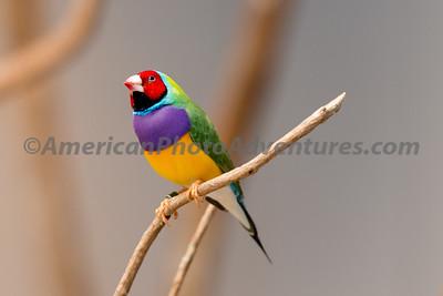 National Aviary_0259
