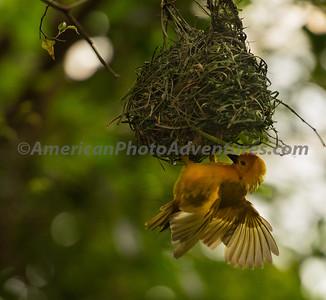 National Aviary_0340