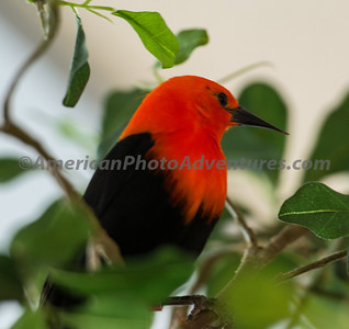 National Aviary_0219