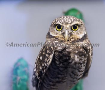 National Aviary_0265