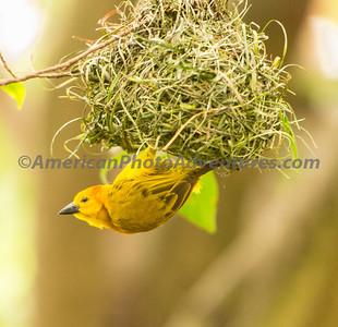 National Aviary_0137