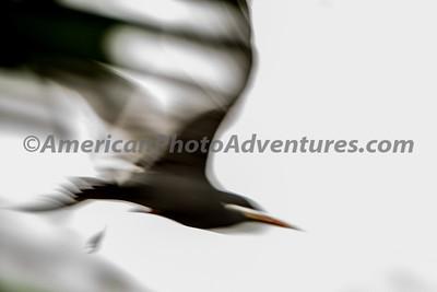 National Aviary_0080