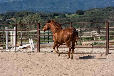 Ojai Horses March 14 2015