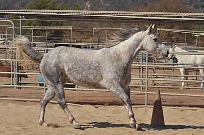 Ojai Horses