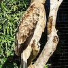 Hawk Full Shot