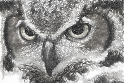 Great Horned Owl Black & White Pencil Sketch