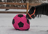 """<div class=""""jaDesc""""> <h4>Shadow Licking Ball - February 6, 2018</h4> <p>Shadow was the first to investigate the colorful ball.  He licked it to see how it tasted.</p></div>"""