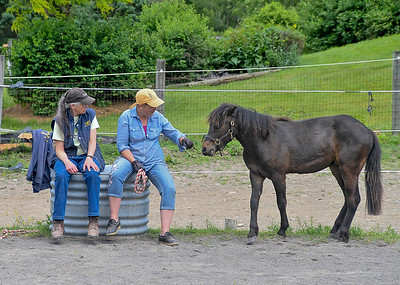 Tiger Approaches Melody and Lynn - June 4, 2018 Tiger had the run of our arena, but chose to come back for a periodic visit with Melody and Lynn.