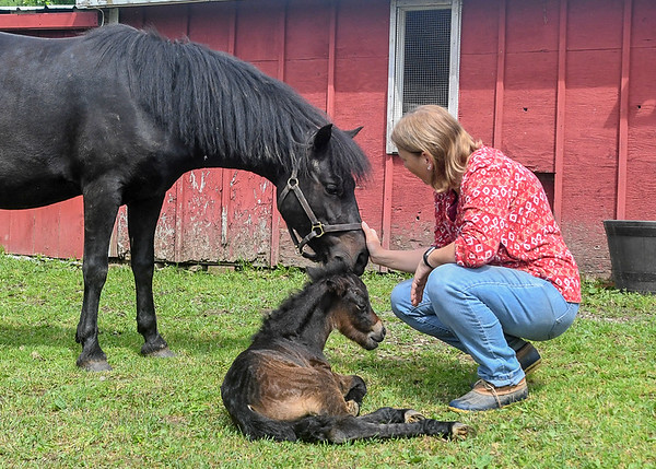 """<div class=""""jaDesc""""> <h4>Melody with Love and Tiger - May 28, 2017</h4> <p>Melody was congratulating Love on her new foal.  Love was handling it all very calmly as she does with everything.</p> </div>"""