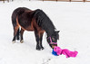 "<div class=""jaDesc""> <h4>Button Sniffing Critter - February 6, 2018</h4> <p>After about a minute, Button started to investigate the critter by sniffing it.  </p></div>"