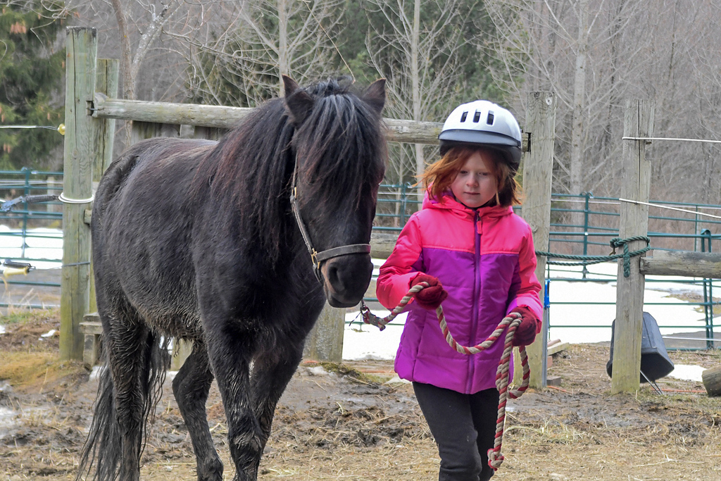 "<div class=""jaDesc""> <h4>Leora Leading Love - March 27, 2018</h4> <p>Love and Moor came to our place for a visit while our grand daughters were visiting.  6 year old Leora is leading Love up to the barn.</p></div>"