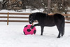 <h4>Moor Paws at Ball - February 6, 2018</h4> <p>Moor was really into checking out the colorful ball.</p>