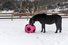<h4>Moor Sniffs Ball - February 6, 2018</h4> <p>Moor really got his nose in there as he smelled the ball.</p>