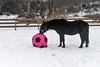 <h4>Moor Licks Ball - February 6, 2018</h4> <p>An object is not fully investigated until it is tasted.</p>