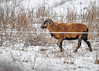 "<div class=""jaDesc""> <h4>Ram Running to Join Ewes - December 30, 2017</h4> <p>This Ram came running out of the barnyard to catch up with the Ewes.</p> </div>"