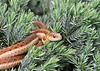 """<div class=""""jaDesc""""> <h4> Garter Snake Close-up - June 9, 2018 </h4> <p>He seemed to be giving me a look that says don't come any closer.</p> </div>"""