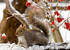 """<div class=""""jaDesc""""> <h4>Gray Squirrel on Bird Perch #1 - February 7, 2008 </h4> <p>Something startled this squirrel while it was eating.  It did a rapid paw spread ready to run.</p> </div>"""