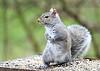 "<div class=""jaDesc""> <h4> Gray Squirrel Checking Her Surroundings - April 2, 2020</h4> <p></p> </div>"