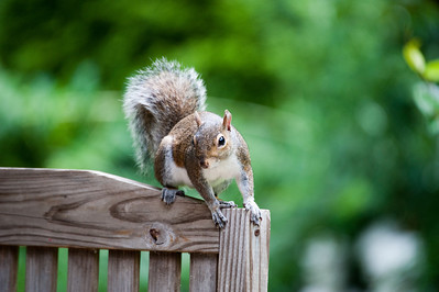 Squirrels are funny little creatures and very curious.