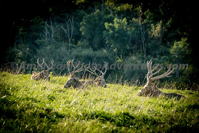 TheWilds_20130915_0655