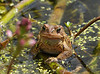 "<div class=""jaDesc""> <h4> Toad Watching Me - May 11, 2014 </h4> <p> </p> </div>"