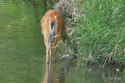 """As the deer pants for streams of water,        so my soul pants for you, O God""  Ps 42:1"