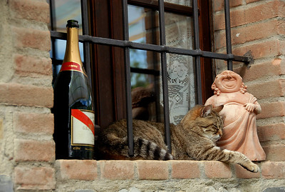 Bacchus And Kitty © 2004 Colleen M. Griffith. All Rights Reserved.  This material may not be published, broadcast, modified, or redistributed without written agreement with the creator.  This image is registered with the US Copyright Office.   www.colleenmgriffith.com www.facebook.com/colleen.griffith