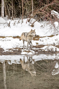 Wolf River Reflection