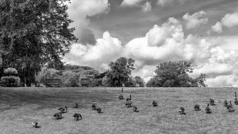 les canards à l'abbaye des Vaux de Cernay