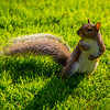 Lazy Sunday Afternoon in the park for Mr. Squirrel