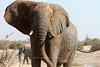 Savuti bull elephant<br /> Botswana