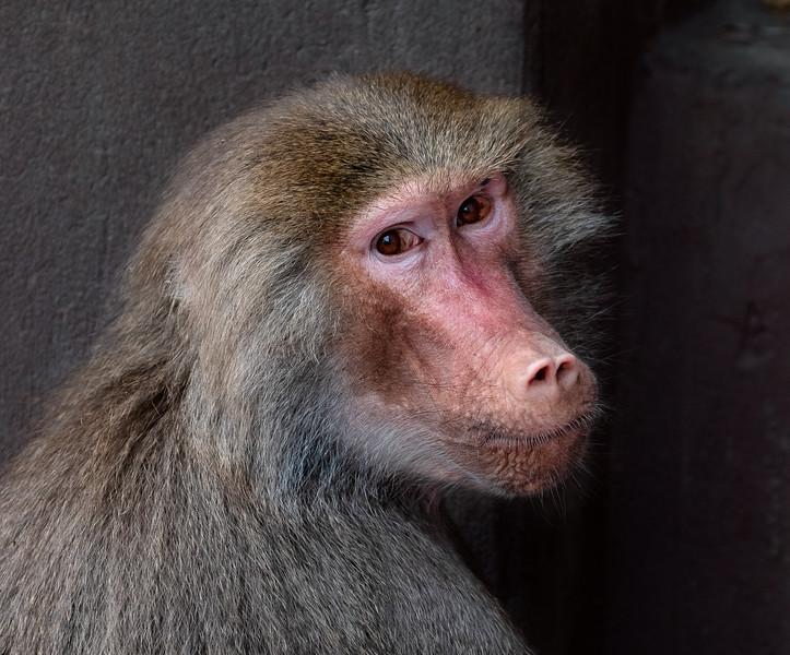 Monkey, will Pose skill