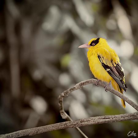 A Bird's Tale