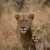 Hunting Pair